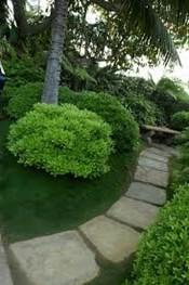 Et billede, der indeholder træ, udendørs, græs, jord  Automatisk genereret beskrivelse